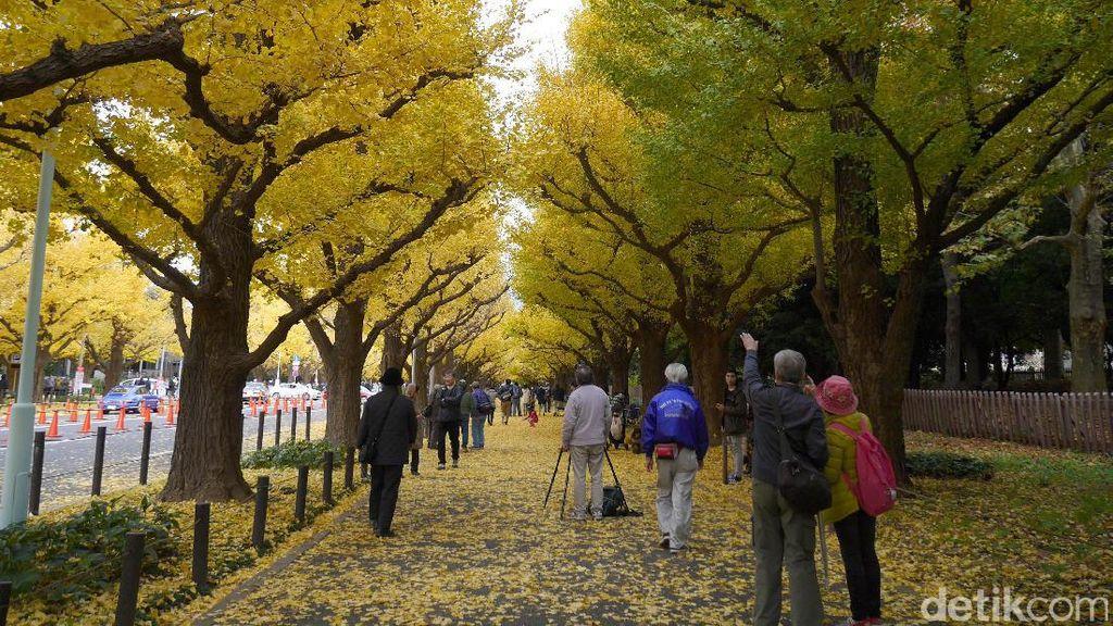 Jingu Gaien, Destinasi Paling Instagrammable di Tokyo Saat Musim Gugur