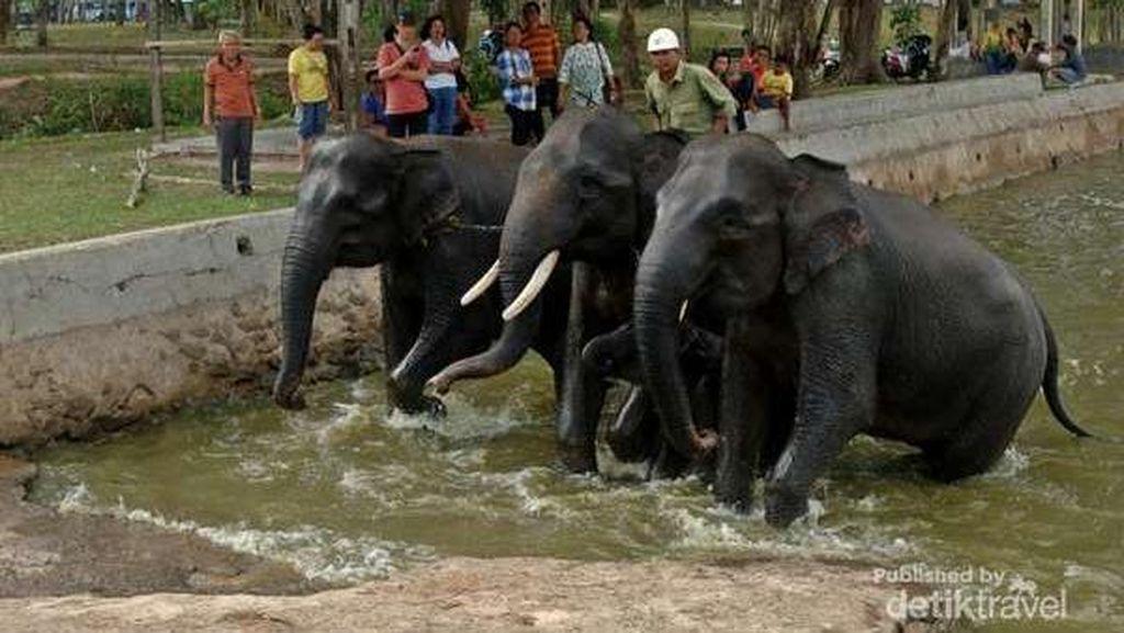 Daripada Baper, Ayo Main dengan Gajah Lucu di 2 Destinasi Ini