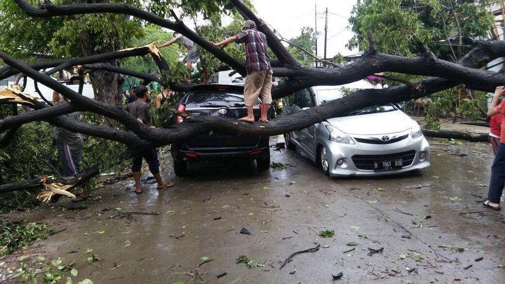 Dua Mobil Rusak Tertimpa Pohon di Cengkareng Jakbar