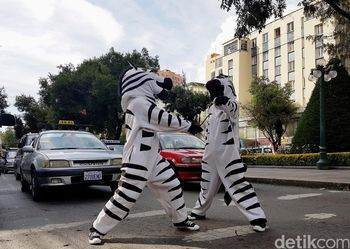 Unik, 'Zebra Cross' di Bolivia Menyapa Pengendara