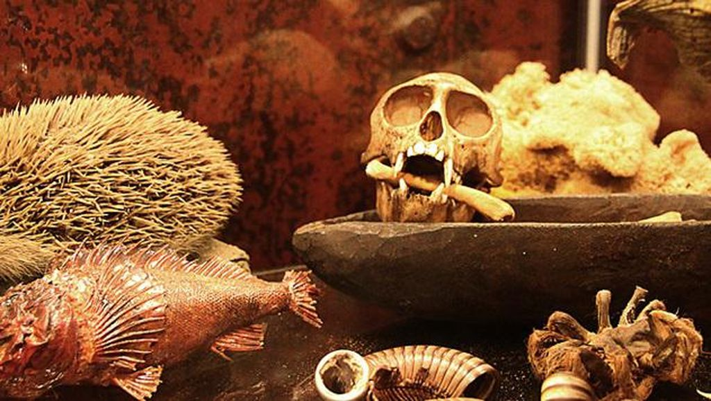 Dari Boneka Voodoo Sampai Hewan Awetan, Aneka Koleksi Eksotis di Museum Jerman
