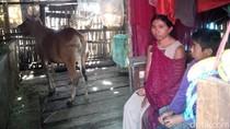 Ibu dan Anak Ini Jadikan Kandang Sapi Sebagai Tempat Tinggal