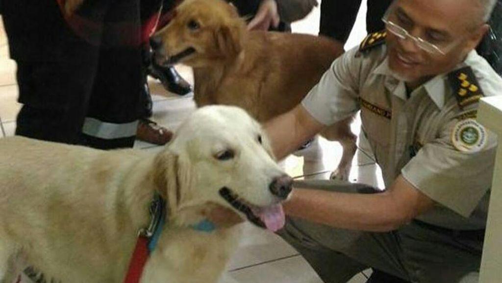 Anjing Alfa dan Delta Dikirim Cari Korban Gempa Aceh, Ini Keistimewaannya