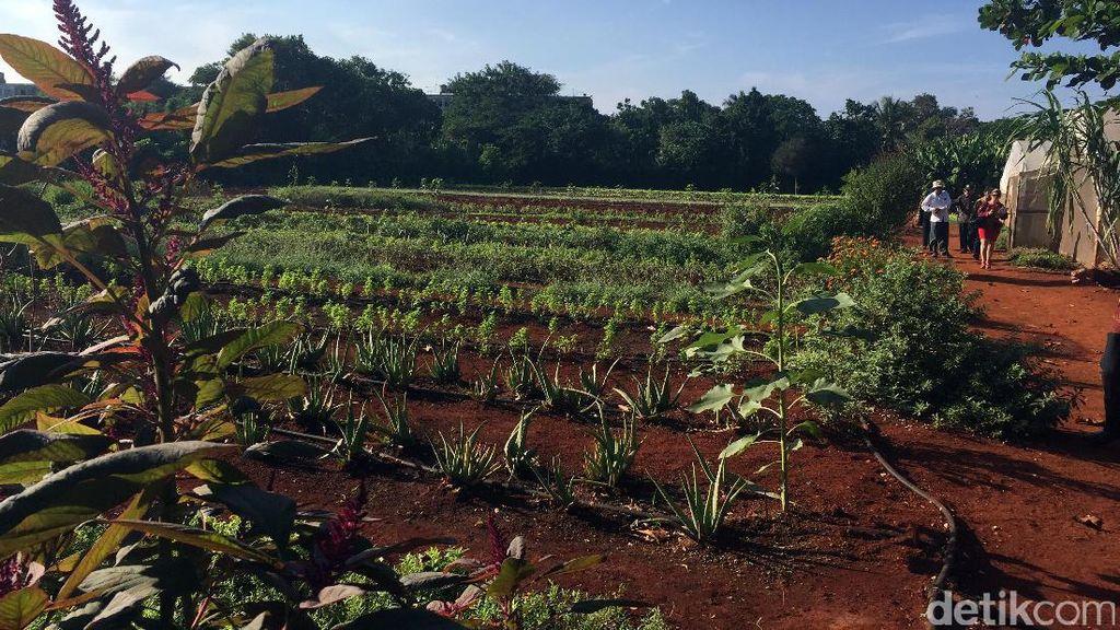 Kemandirian dan Model Pertanian ala Kuba, Apa Pelajaran untuk Indonesia?