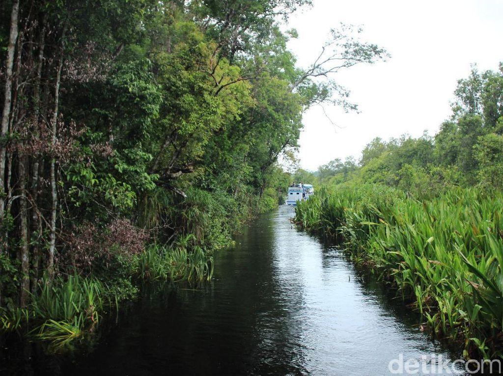 Ada Sungai Berwarna Hitam di Kalimantan Tengah