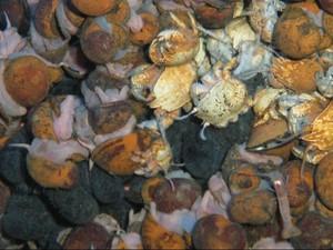 6 Spesies Hewan Laut Baru Ditemukan di Ceruk Kedalaman Samudera Hindia