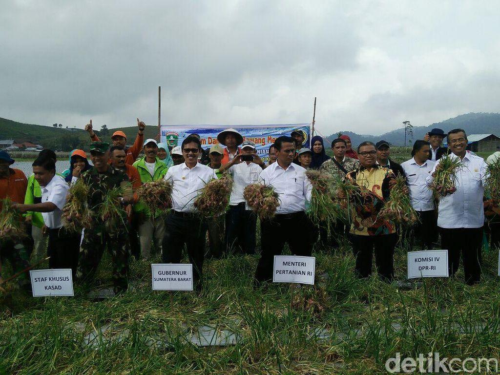 Mentan Kagum Pendapatan Petani Bawang di Solok Rp 200 Juta/Hektar