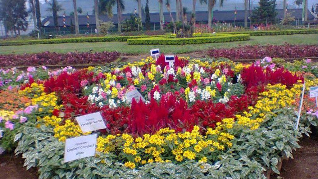 Liburan yang Berbunga-bunga di Cianjur