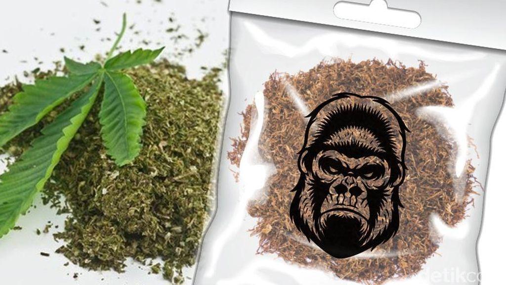 Pengedar Tembakau Gorilla yang Ditangkap Sudah 2 Tahun Berjualan