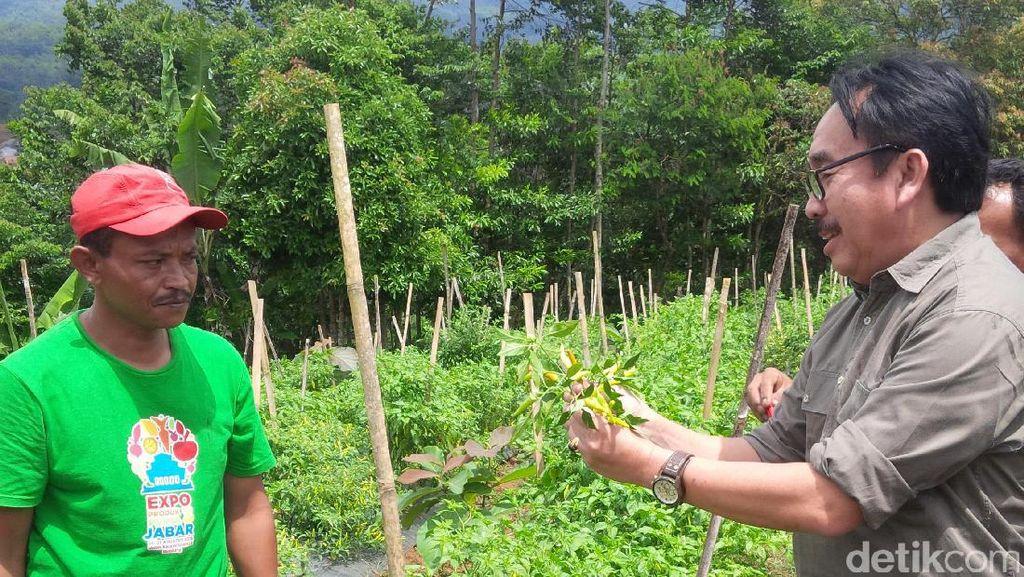 Kementan akan Pasarkan Cabai dan Bawang Lewat Toko Tani Indonesia