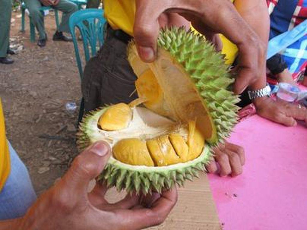 Tak Kalah Nikmat, Ini 5 Durian dari Luar Jawa yang Manis Legit!