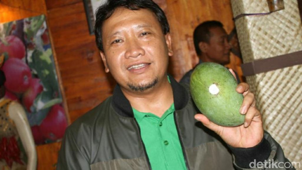 Mangga Gadung Klonal 21 Ditetapkan Jadi Buah Asli Kabupaten Pasuruan