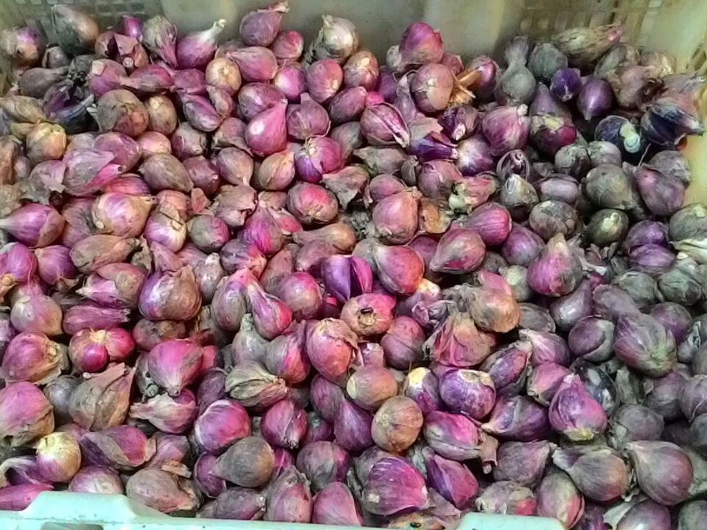Bawang Merah Tembus Rp 52.000/Kg, Kementan: Something is Wrong!