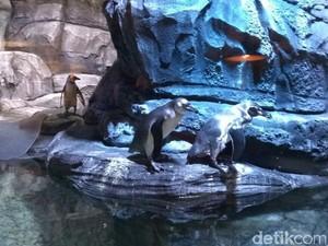 Begini Penampakan Penguin-penguin Hidup di Resto di Jakbar