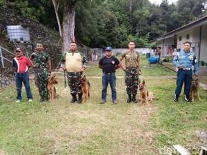Polisi Militer TNI AL Lantamal IV Kini Miliki 4 Anjing Pelacak