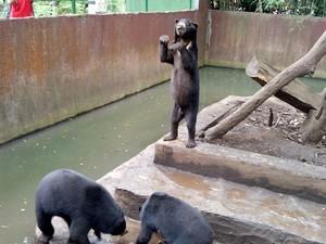 Bonbin Bandung Minta Ridwan Kamil Lihat Langsung Beruang Kurus
