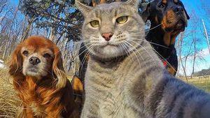 Gaya 'Selangit' Selfie Para Hewan yang Bikin Gemas
