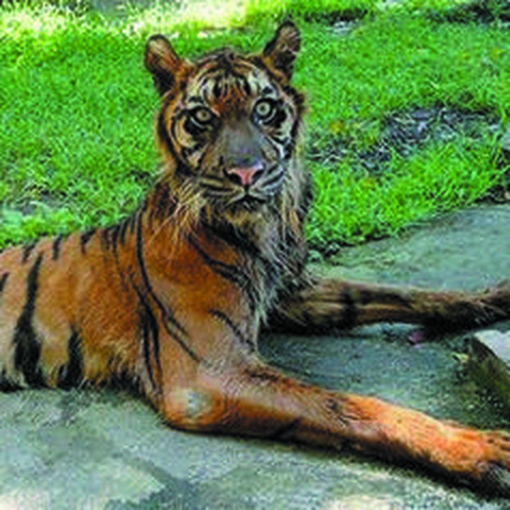 Aneka Kasus Penelantaran Hewan di Kebun Binatang Dunia