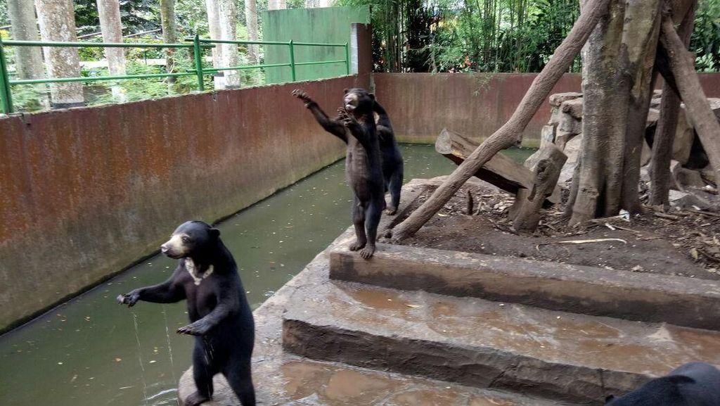 Ridwan Kamil Curhat di Facebook Soal Bonbin dan Beruang Kurus