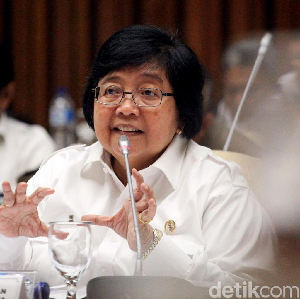 Lumba-lumba Diangkut Sriwijaya Air, Menteri Siti: Ada Standarnya
