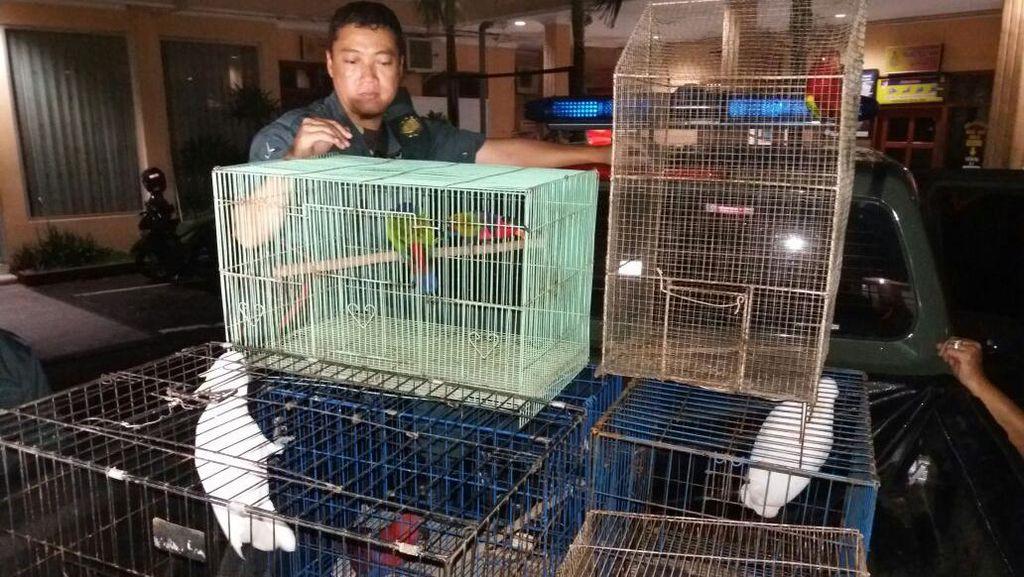 Polres Jember Amankan Penjual dan Pembeli Satwa Dilindungi