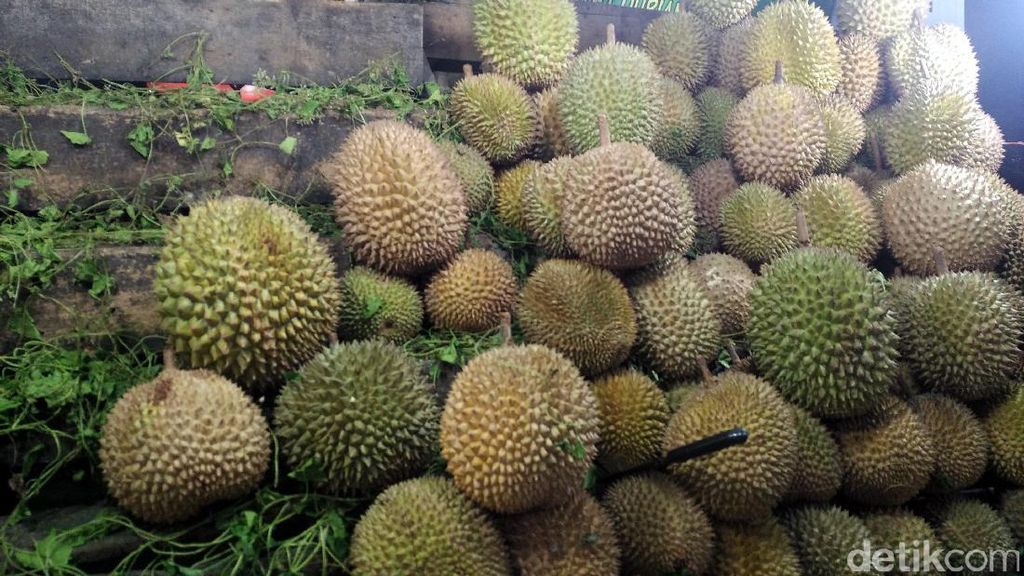 Wisata Malam di Pekanbaru, Asyiknya Berburu Durian