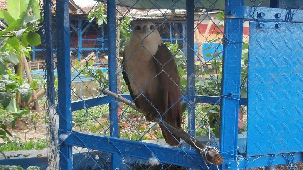 Petugas Sita Satwa Liar Dilindungi di Rumah Camat Kabupaten Bandung