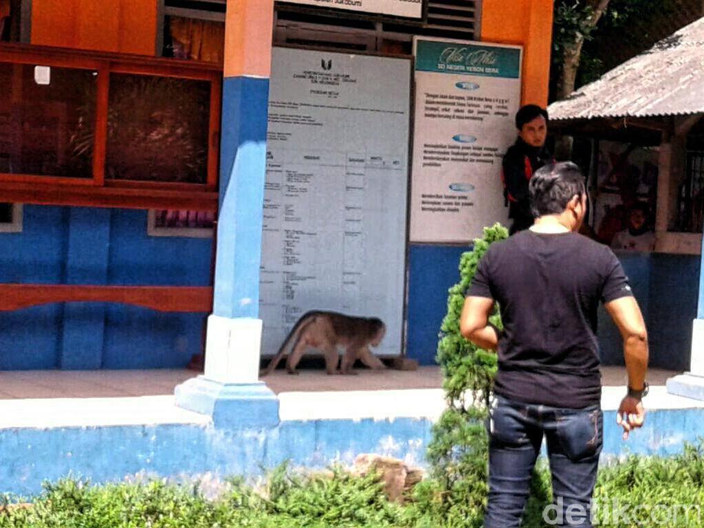 Aksi Kawanan Monyet Serang Manusia dari Gigit Bocah hingga Pemotor