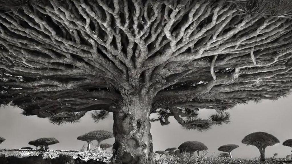 Penampakan Socotra, Pulau Alien yang Terasing di Muka Bumi