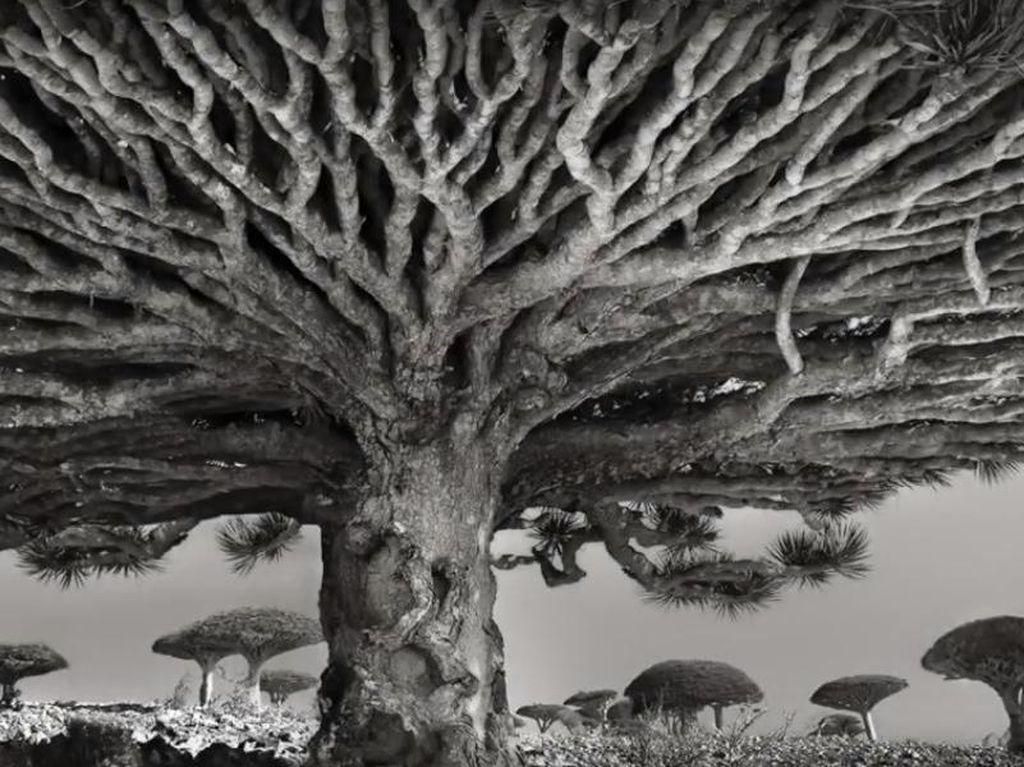 Kisah Fotografer Bertualang Memotret Pohon-pohon Tertua di Dunia