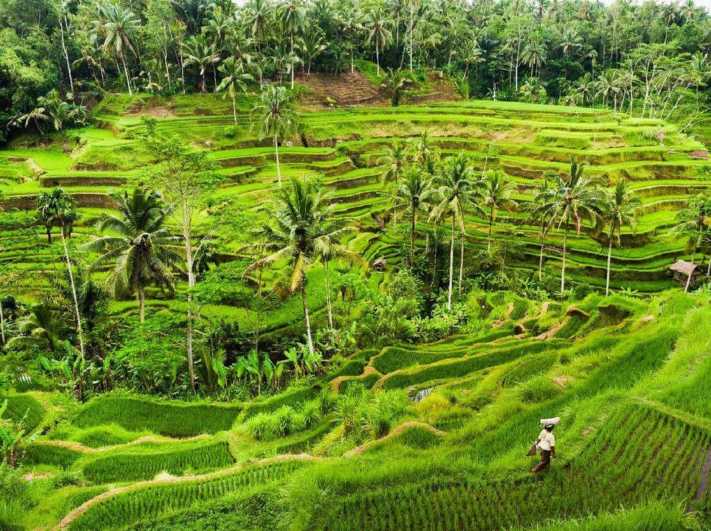 Buru Guide Ilegal Rusia, Satpol PP Intai Obyek Wisata di Bali