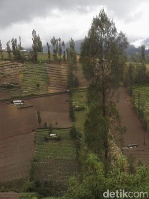 3 Kecamatan di Kaki Bromo akan Dijadikan Kampung Keripik Kentang