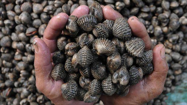 Pedagang menujukkan hasil tangkapan kerang laut yang dijual di Perkampungan Nelayan Tungkal II, Kuala Tungkal, Tanjung Jabung Barat, Jambi, Minggu (5/2). Kerang laut tersebut dijual Rp15 ribu per kilogram. ANTARA FOTO/Wahdi Septiawan/17.