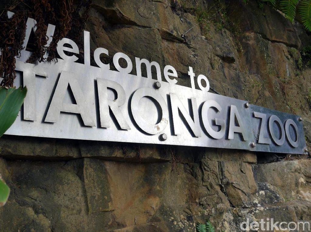 Kebun Binatang di Sydney Dapat Guyuran Dana Rp 173 M di Tengah Pandemi