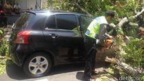 Pohon Trembesi di Semarang Tumbang Menimpa Mobil