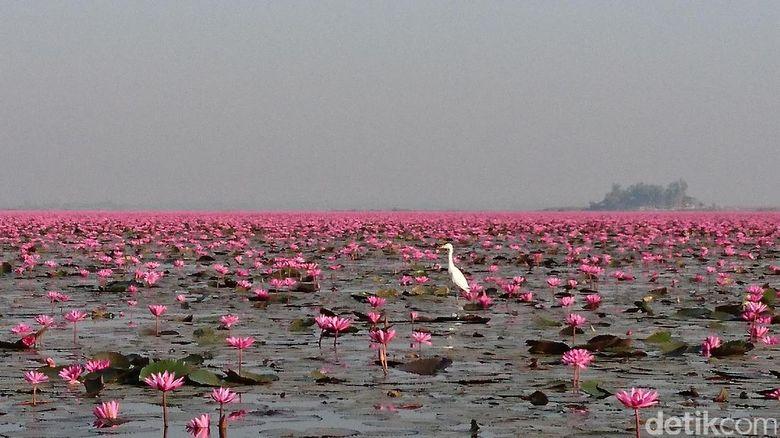 Foto: Danau pink di Thailand (Masaul/detikTravel)