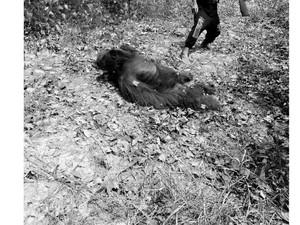Orangutan Dibantai di Kalteng, Komisi IV Dorong Pembentukan Satgas