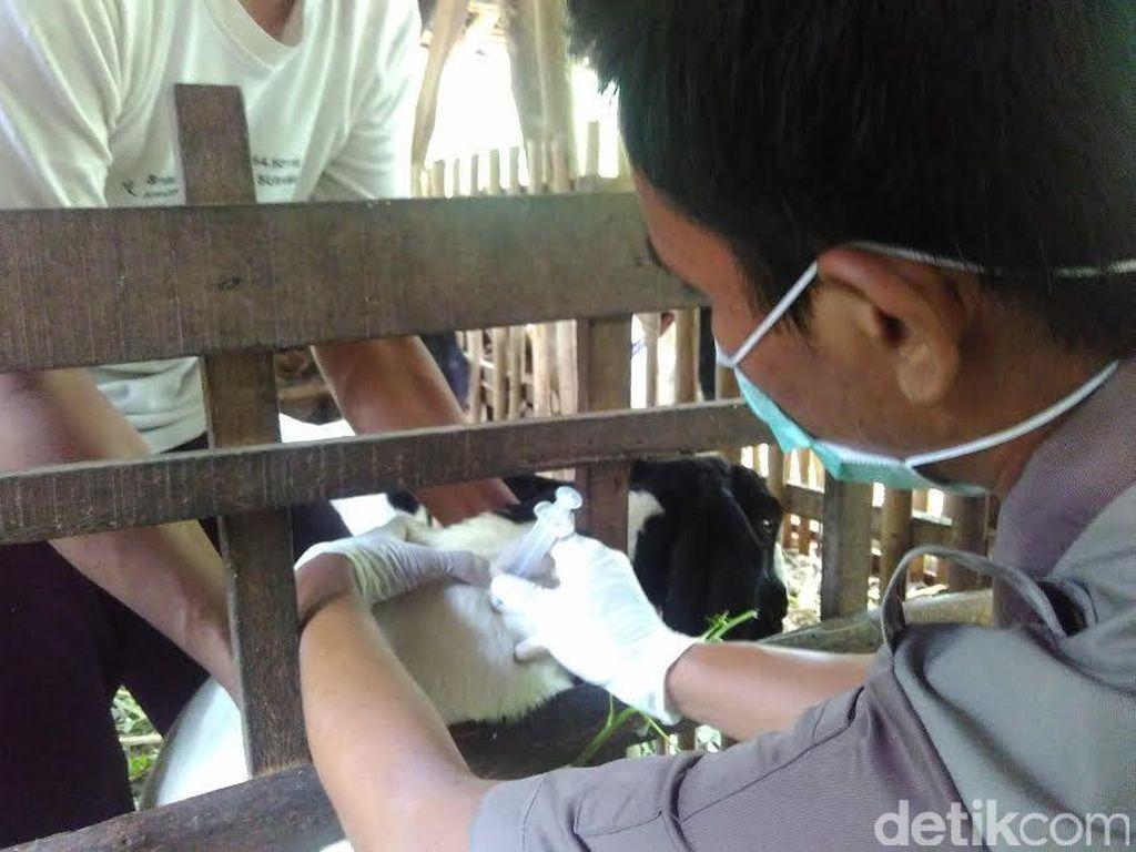 Jurus Kementan Cegah Penyebaran Anthrax di Sulsel dan Gorontalo