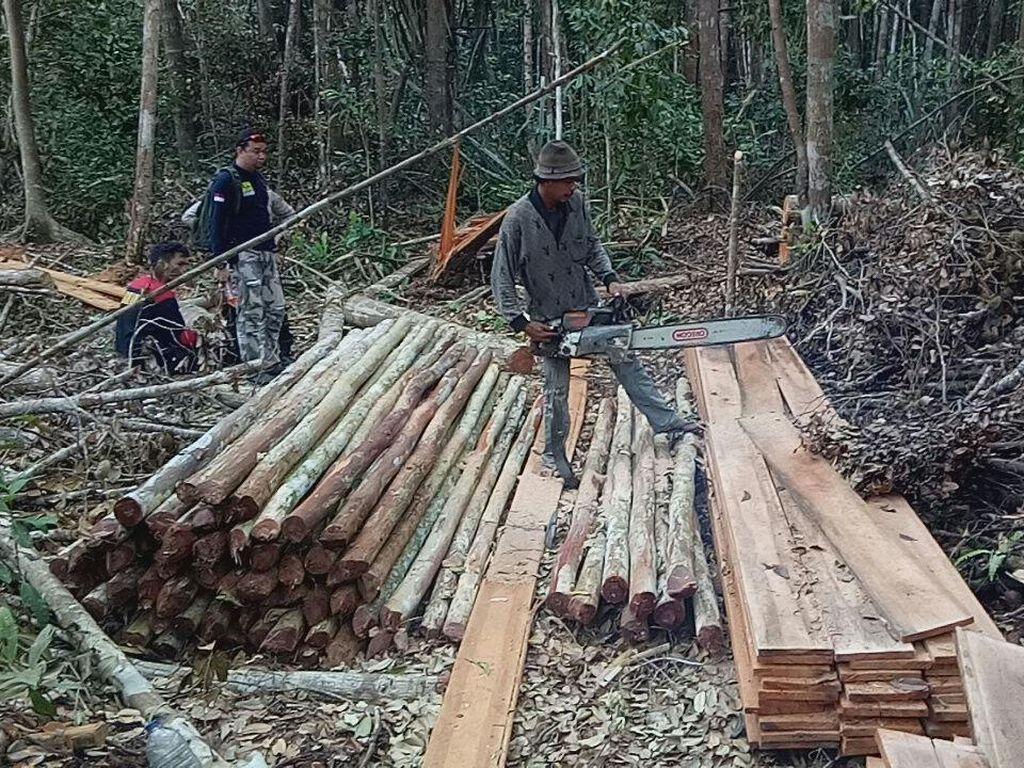 Polisi: Tersangka Illegal Logging di Kalteng Palsukan Dokumen Terbang