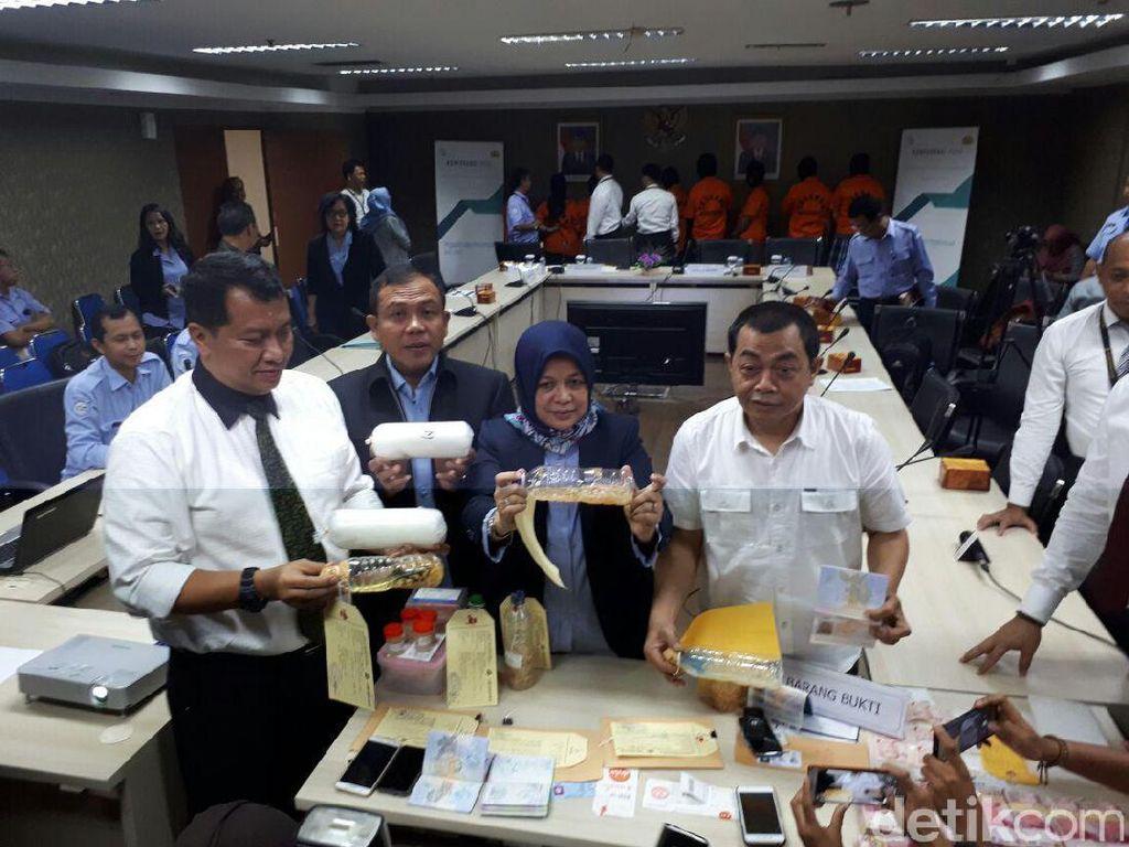 KKP Ungkap PNS Selundupkan Lobster, Punya Tabungan Rp 195 M