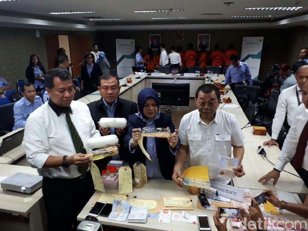 Pemerintah Gagalkan Ekspor Benih Lobster Senilai Rp 7 Miliar