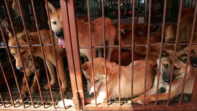 Tentang Rencana Bupati Tutup Semua Warung Daging Anjing di Karanganyar
