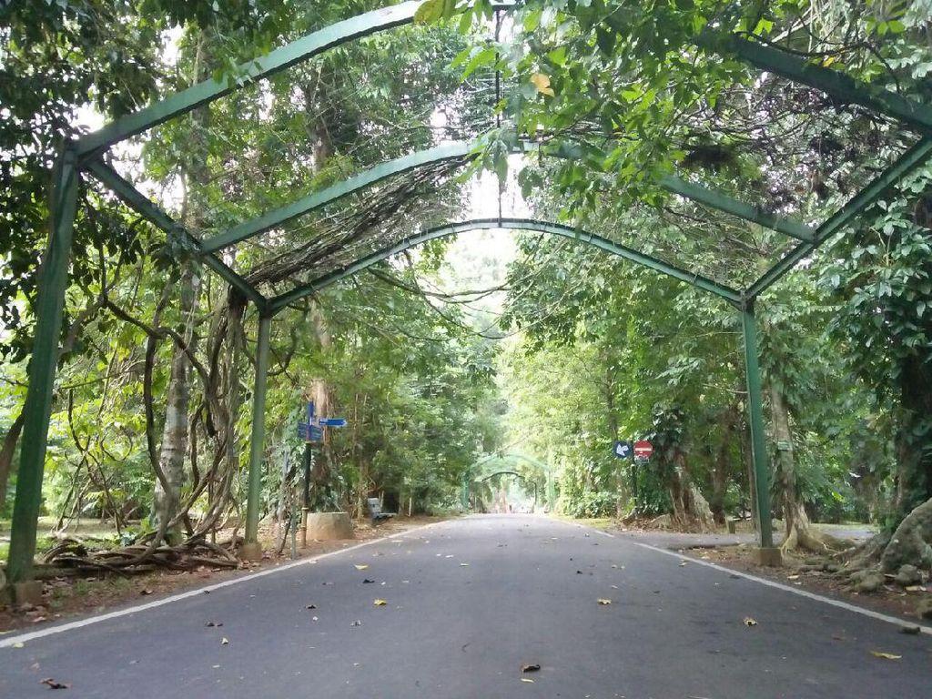 Kebun Raya Bogor dan Kebun Raya Cibodas Kembali Buka 7 Juli