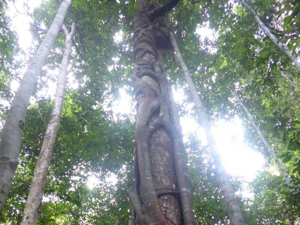 Melupakan Hutan Adat