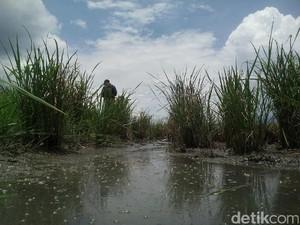 Tercemar Limbah Kulit, Petani di Garut Merugi Jutaan Rupiah