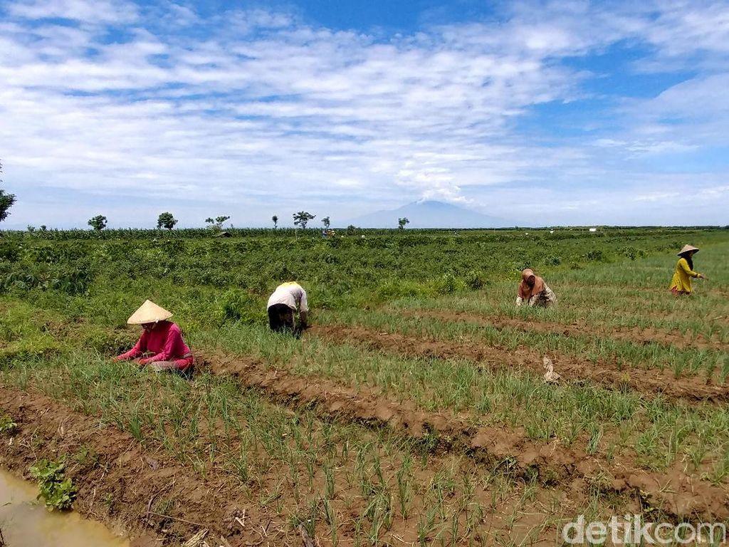 DPR Pertanyakan Nasib Impor Produk Hortikultura Era UU Cipta Kerja
