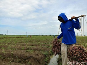 50% Produksi Pangan RI Masih Terpusat di Pulau Jawa
