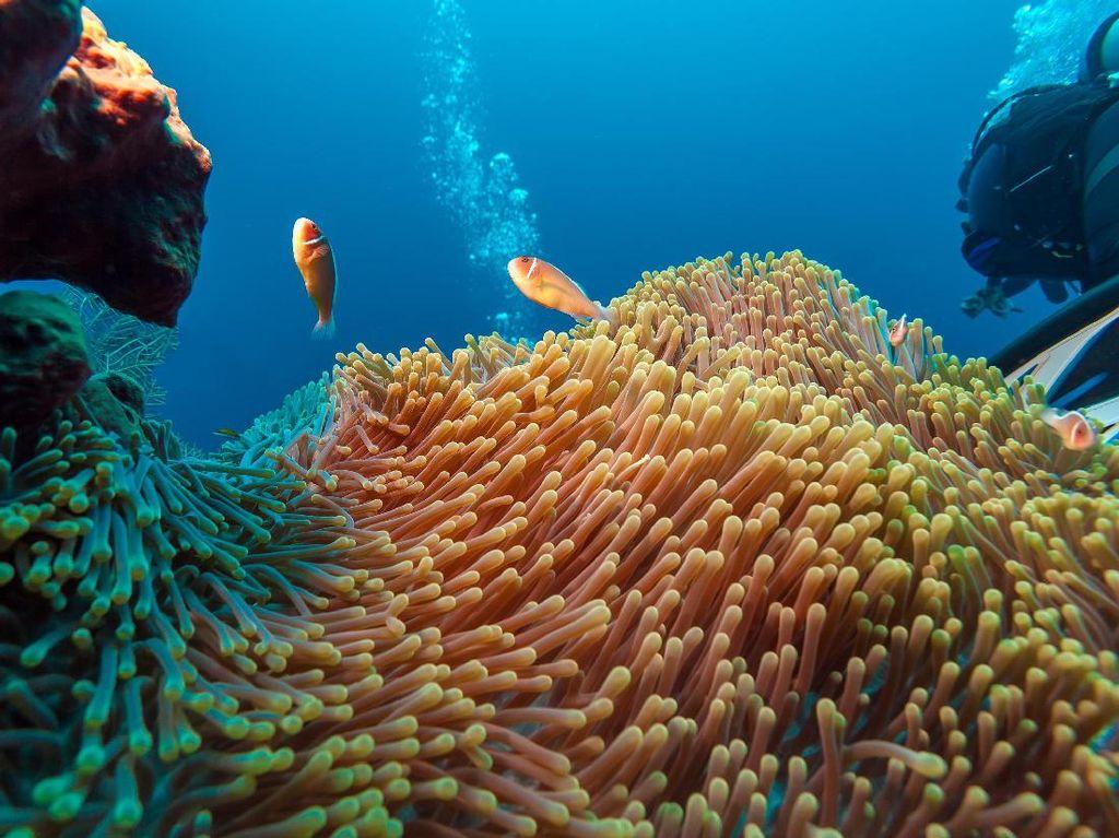 Pelaku Wisata Selam Labuan Bajo Ajak Traveler untuk Jaga Laut