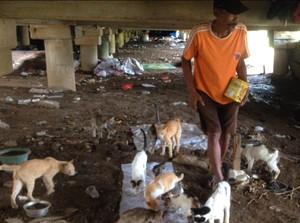 Kisah Ahmad, Pemulung Penyelamat Puluhan Kucing di Kampung Melayu