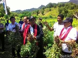 Kawasan Pangan di Perbatasan NTT-Timor Leste Dibangun